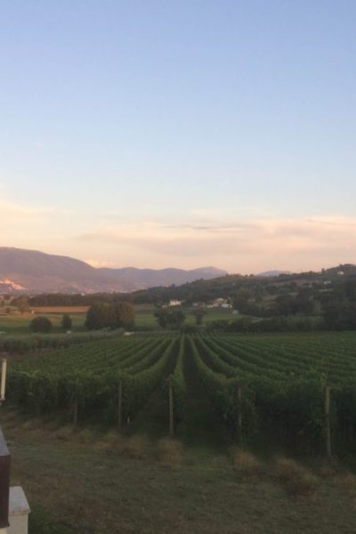 The Complete Guide to Enjoying the Wine of Umbria